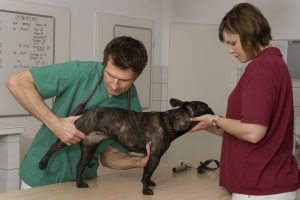 Veterinary Orthopedic Surgery in Canberra and Surrounding